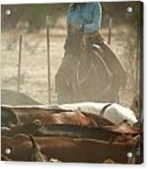 Cattle Drive Acrylic Print