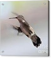 Caught In Mid-air Acrylic Print
