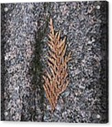 Cedar On Granite Acrylic Print