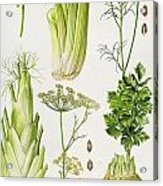 Celery - Fennel - Dill And Celeriac  Acrylic Print by Elizabeth Rice
