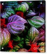Celosia Acrylic Print
