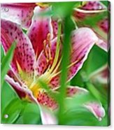 Central Park Lily Acrylic Print