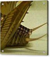 Cerci Of Cave Cricket Acrylic Print
