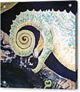 Chameleon Tail Acrylic Print