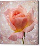 Champagne Rose. Acrylic Print
