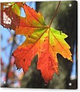 Changing Colors Acrylic Print