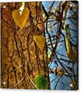 Changing Leaves And A Cottonwood Trunk Acrylic Print