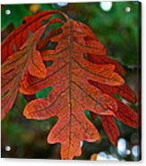 Changing Oak Acrylic Print