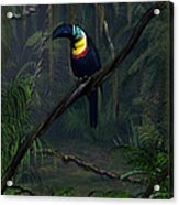 Channel Billed Toucan Acrylic Print