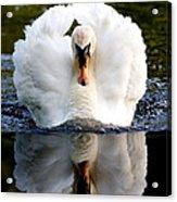 Charging Swan Acrylic Print
