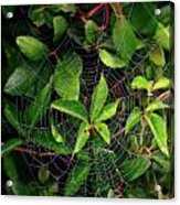 Charlotte's Web Acrylic Print