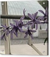 Charming Orchid  Acrylic Print