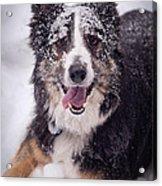 Chasing The Snow Acrylic Print by Joye Ardyn Durham