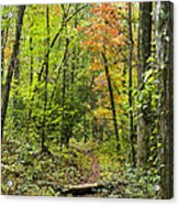 Chatooga Forest Trail Acrylic Print