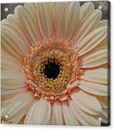 Cheeriest Flower Acrylic Print