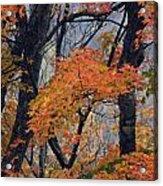 Cherohala Maple - D007676 Acrylic Print