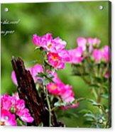 Cherokee Rose Card - Flower Acrylic Print