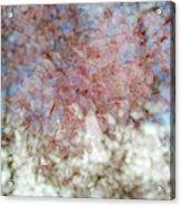 Cherry Blossom Abstract Acrylic Print