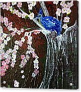 Cherry Blossom And Blue Bird  Acrylic Print by Pretchill Smith