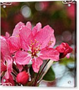 Cherry Blossom Greeting Card Blank With Decorations Acrylic Print