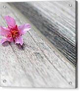Cherry Blossom On Bench Acrylic Print