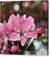 Cherry Blossom Photo Art And Blank Greeting Card Acrylic Print