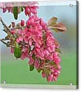 Cherry Blossom Spring Photoart Acrylic Print