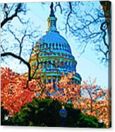 Cherry Blossoms And Capital Dome Acrylic Print