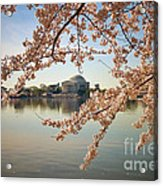 Cherry Blossoms And Jefferson Memorial Acrylic Print
