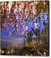 Cherry Blossoms In The Sun - New York City Acrylic Print by Vivienne Gucwa