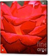 Cherry Red Rose Acrylic Print