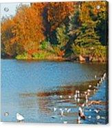 Chester In Autumn Acrylic Print