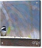 Chestnut-backed Chickadee In The Rain Acrylic Print