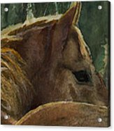 Chestnut Dreams Acrylic Print