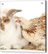 Chicken And Rabbit Acrylic Print