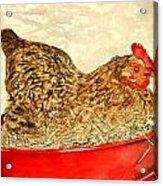 Chicken Hen Painting Art Print Acrylic Print