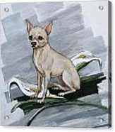 Chihuahua I Thought You'd Never Come Home Acrylic Print
