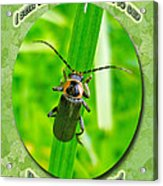 Child Kid Birthday Greeting Card - Lightning Bug Acrylic Print