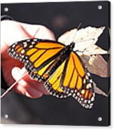 Child With Butterfly Acrylic Print