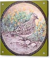 Chilean Tinamou Acrylic Print