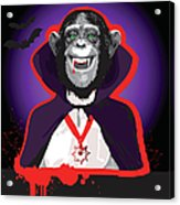 Chimpanzee In Dracula Costume Acrylic Print
