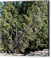 China Creek China Beach Juan De Fuca Provincial Park Bc Canada Acrylic Print by Andy Smy