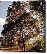 Chinbrook Meadows Acrylic Print