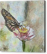 Chinese Butterfly Acrylic Print