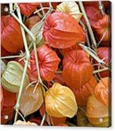Chinese Lantern Flowers Acrylic Print