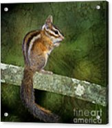 Chipmunk In The Forest Acrylic Print