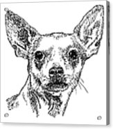 Chiwawa-portrait-drawing Acrylic Print