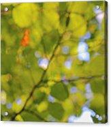 Chlorophyll Daydream Acrylic Print