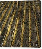 Chocolate Steel Acrylic Print