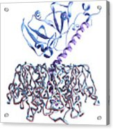 Cholera Toxin Acrylic Print